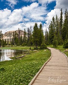 Path Along Mirror Lake