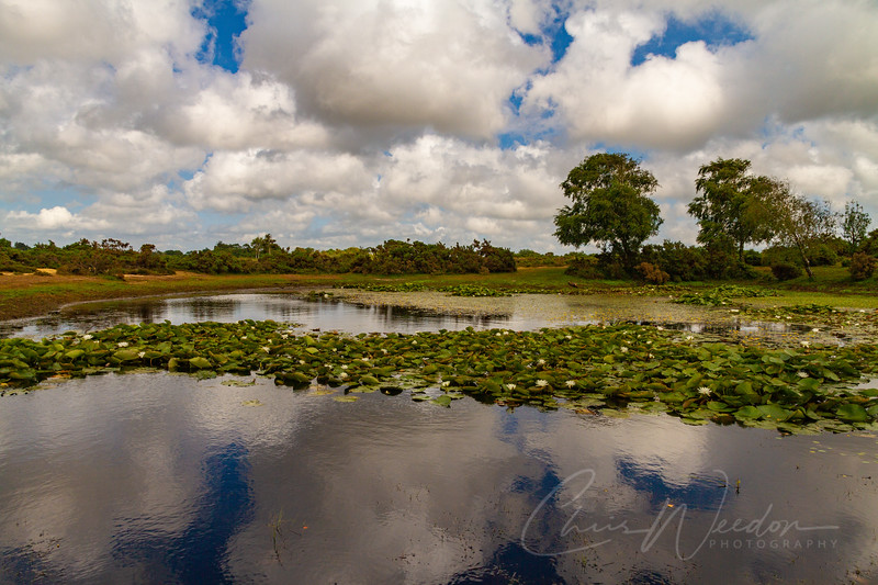 New Forest-20.jpg