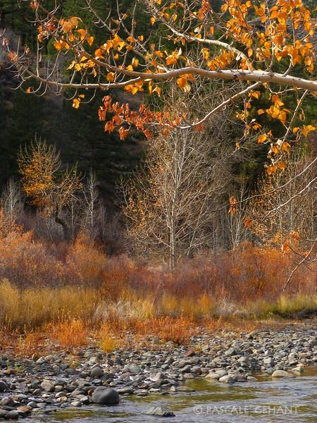 Autumn on East Carson river 2