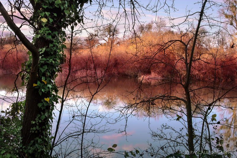 Mirror on the slough 3