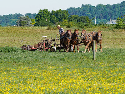 ©2020 Dennis A  Mook; All Rights Reserved; Lancaster County; Amish Farmer Mowing Field; Five Images-001255