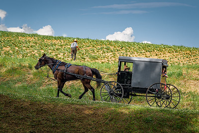 ©2020 Dennis A  Mook; All Rights Reserved; Lancaster County; Amish Children In Buggy-