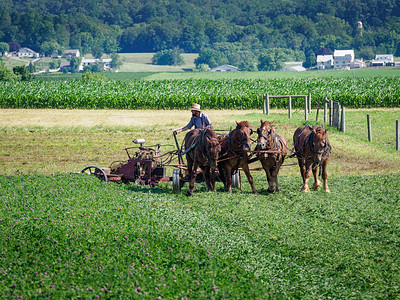 ©2020 Dennis A  Mook; All Rights Reserved; Lancaster County; Amish Farmer Mowing Field; Five Images-001353