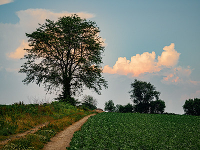 ©2020 Dennis A  Mook; All Rights Reserved; Lancaster County; Tree at Dusk (1)-000719