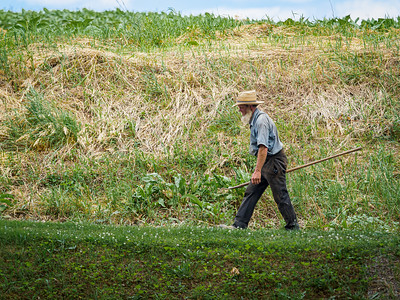 ©2020 Dennis A  Mook; All Rights Reserved; Lancaster County; Amish Farmer Walking Up Hill-000907