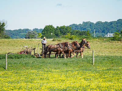 ©2020 Dennis A  Mook; All Rights Reserved; Lancaster County; Amish Farmer Mowing Field; Five Images-001254