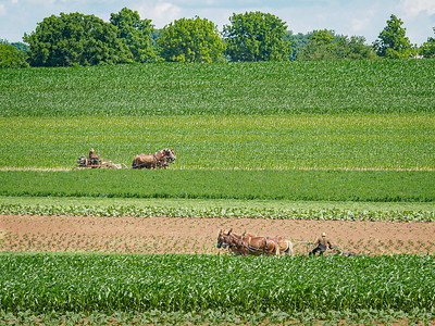 ©2020 Dennis A  Mook; All Rights Reserved; Lancaster County; Two Amish Farmers Plowing-001528