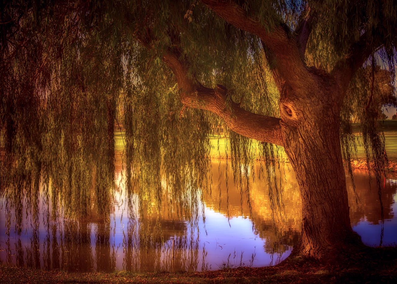 Willow Glow