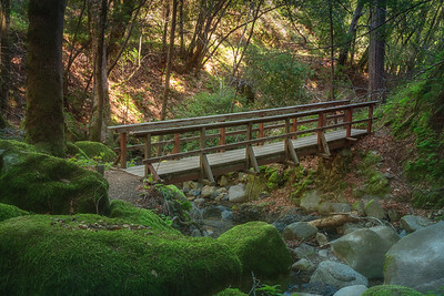 Bridge in the Moss