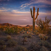 Painted Saguaro