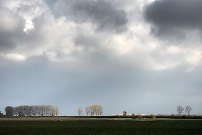 Poplars - Crevalcore, Bologna, Italy - November 14, 2012