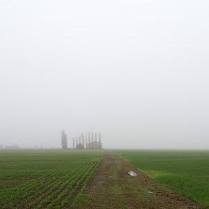 Fog - Crevalcore, Bologna, Italy - November 28, 2014