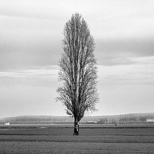 Tree - Crevalcore, Bologna, Italy - November 30, 2018