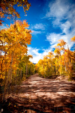 Colorado Fall Foliage 041 | Wall Art Resource