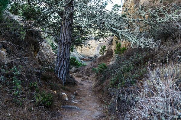 Point Lobos State Natural Reserve, Carmel-by-the-Sea, CA