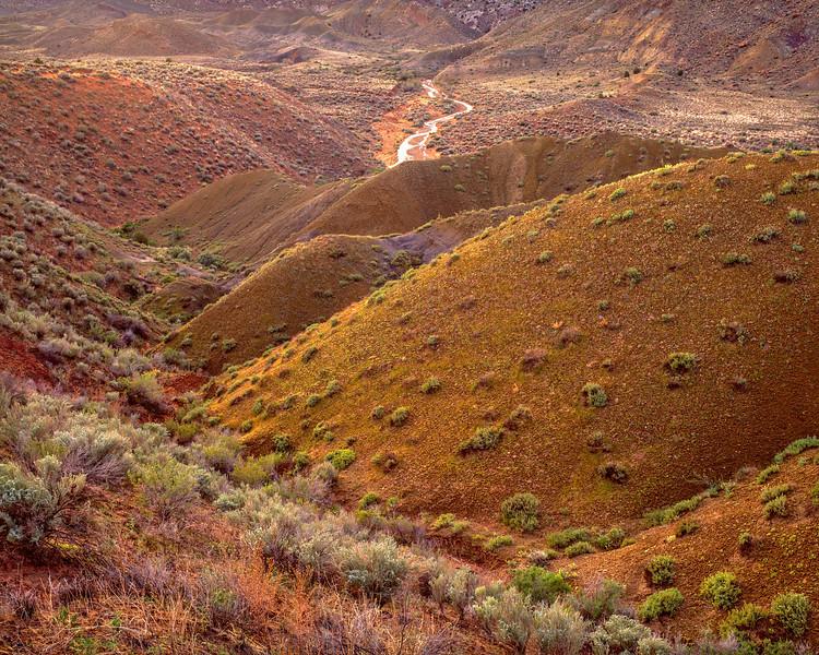 The Desert After Rain