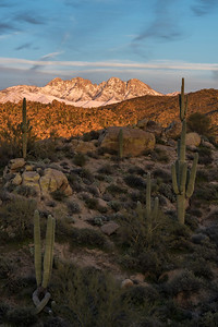 """Saguaros to Snow"""