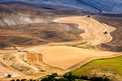 Palouse Harvest