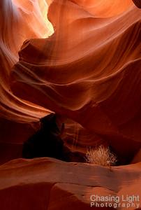 Antelope Canyon Tumbleweed