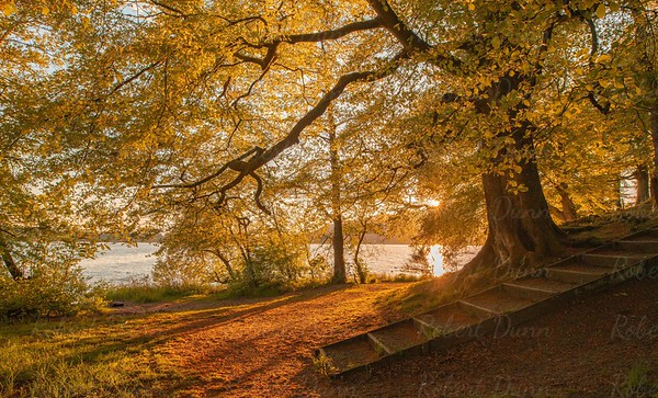 Lake of Menteith, Golden Hour