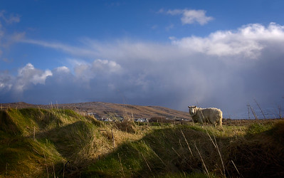 Sky, clouds and sheep near Gortahork, County Donegal, Ireland