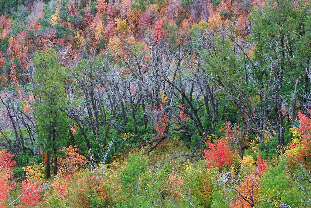 Vibrant Autumn Mountainside 2