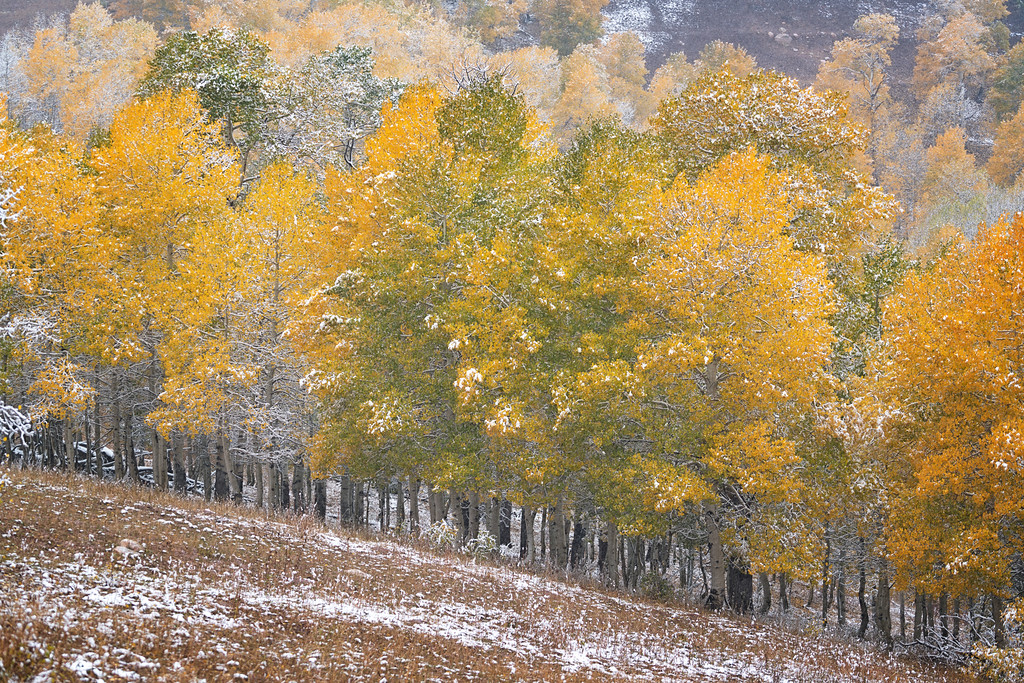 Autumn Snowfall on the Nebo Loop