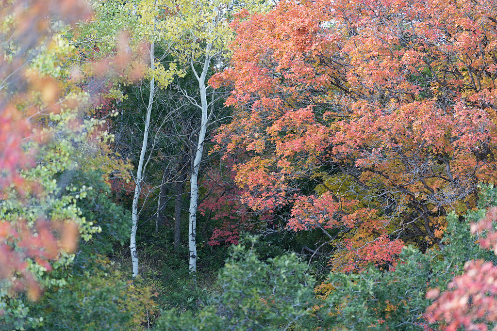 Autumn Along Pine Canyon Road 02