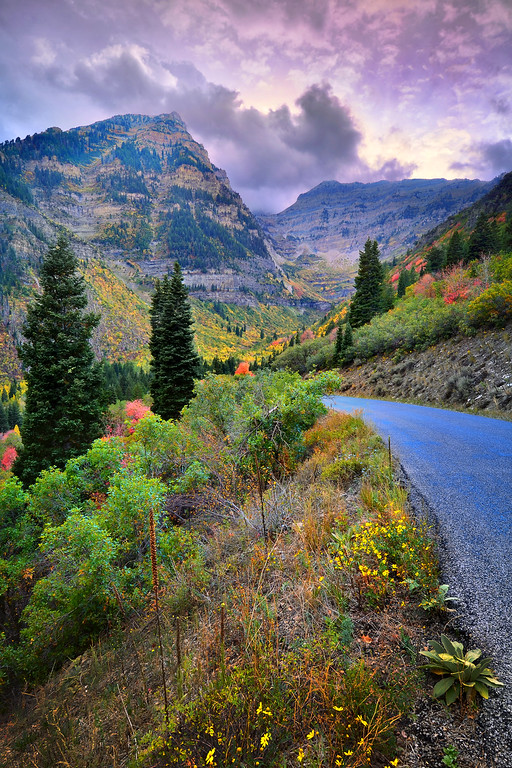 Fall Colors Behind Mt  Timpanogos