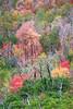 Vibrant Autumn Mountainside 3