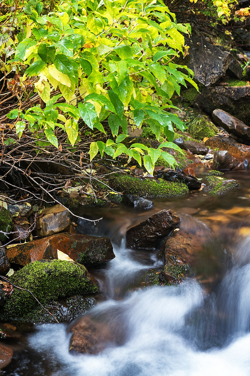 Mossy Autumn Stream 2