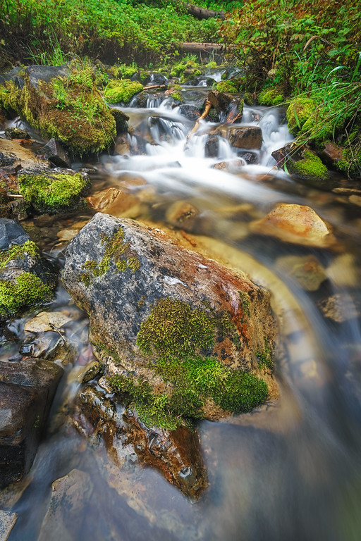 Mossy Autumn River 6