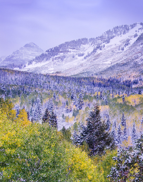 Fall Frosted Over