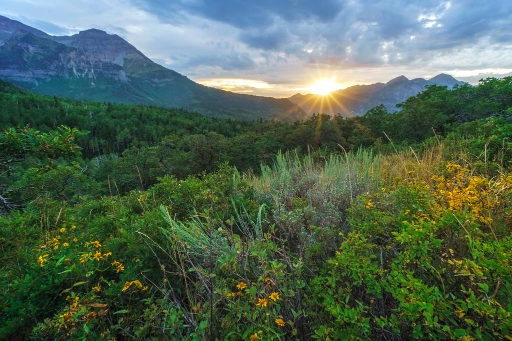 Summer Mountain Sunset