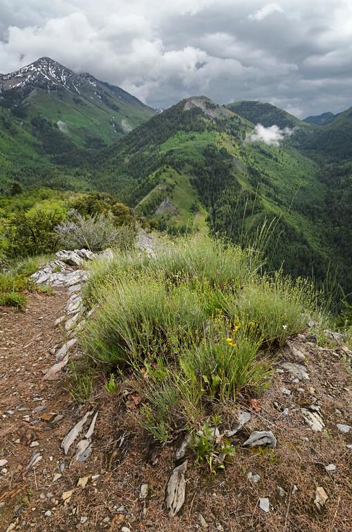 Green Mountain Summer Vista