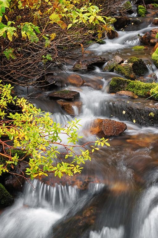 Mossy Autumn Stream 1