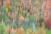Stormy Autumn Afternoon Abstract