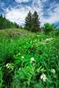 Timpooneke Wildflowers