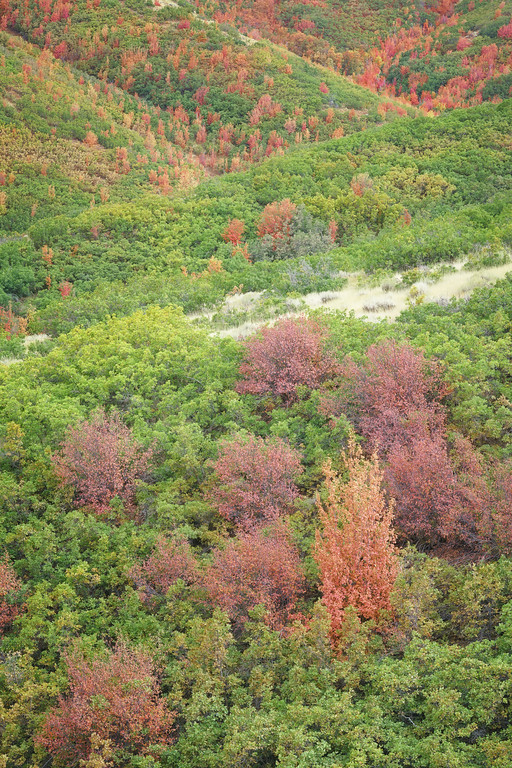 Colorful Mountain Carpet