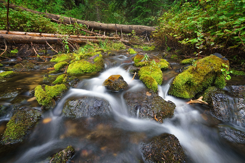Mossy Autumn River 9