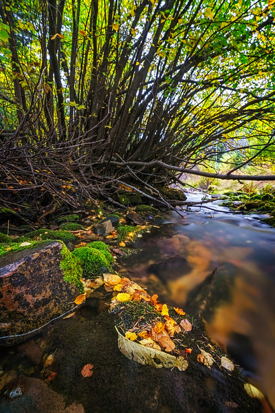 Trickling Beneath the Trees