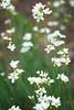 Summertime Wildflowers