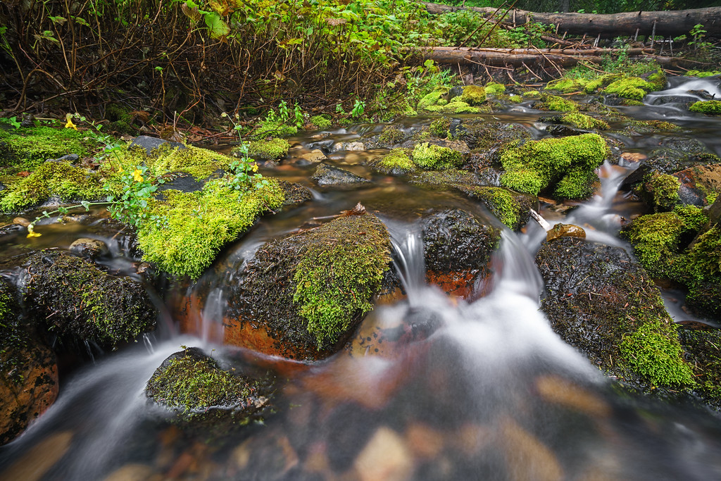 Mossy Autumn River 8