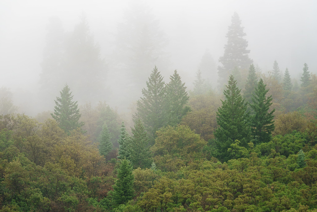 Misty Mountain Green