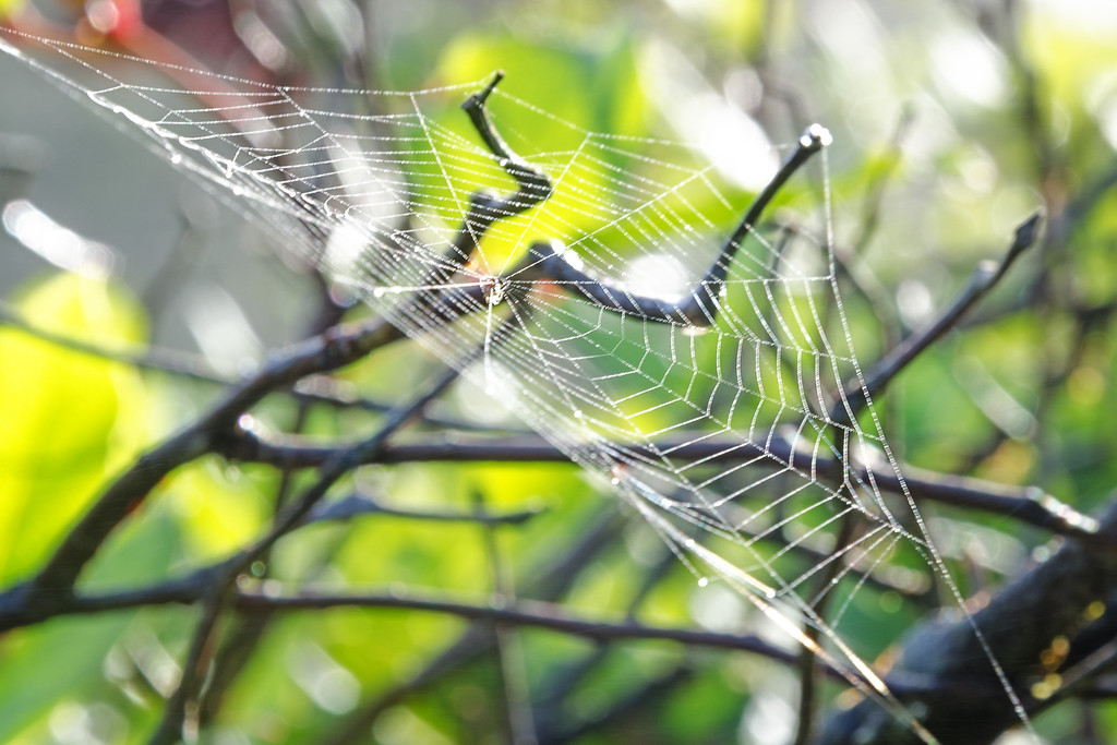 Web in the Morning Light