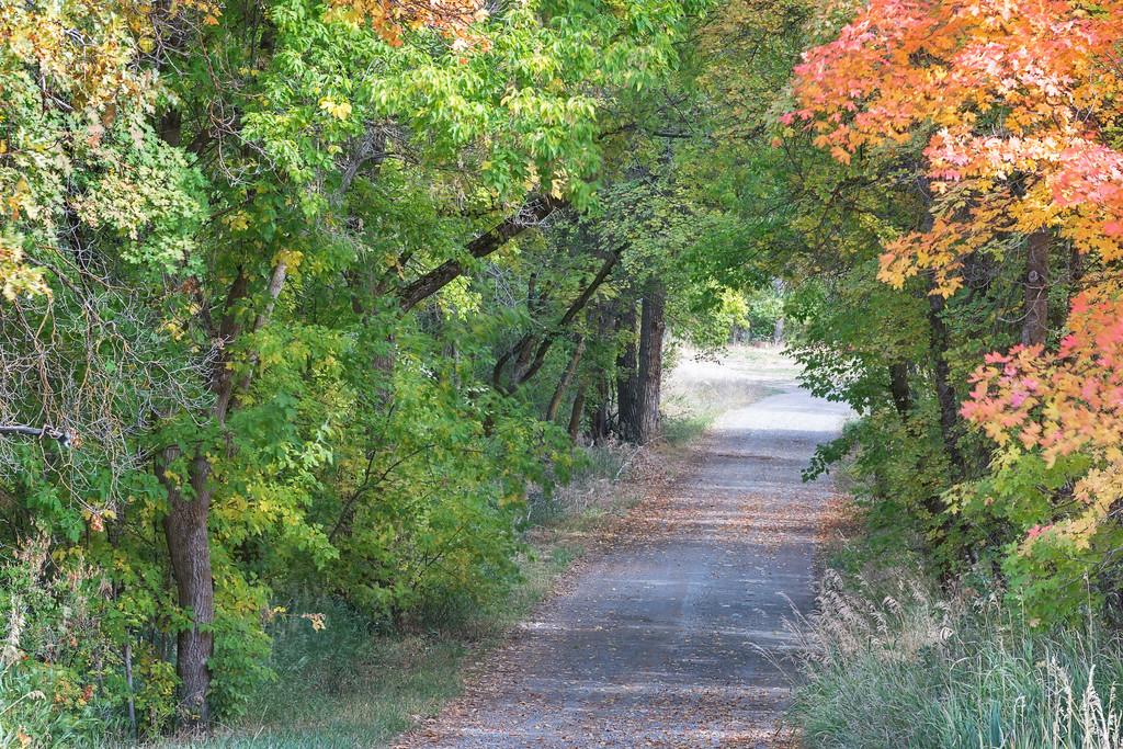 Private Autumn Driveway