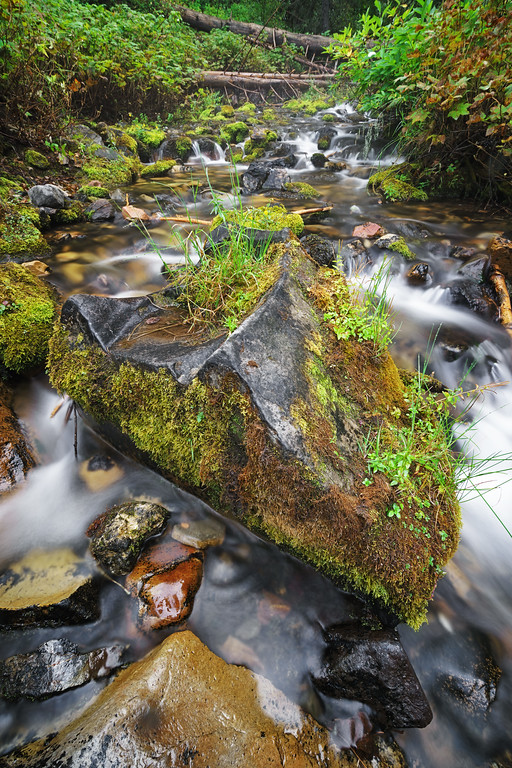 Mossy Autumn River 7