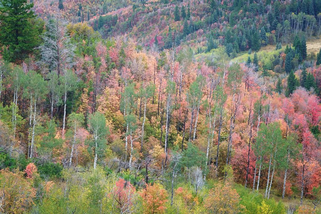 Vibrant Autumn Mountainside 1
