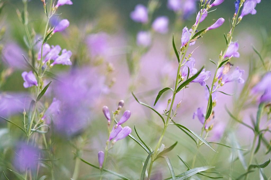 Wildflower Twilight