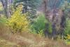 Early Autumn Yellows